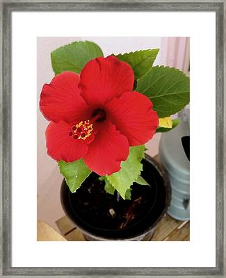 First Bloom Framed Print by Robin Lewis