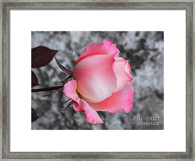 First Blush Framed Print by Agnieszka Ledwon