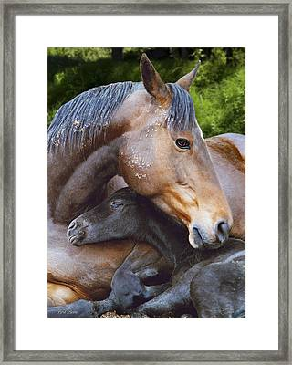 First Born Framed Print by Diane C Nicholson