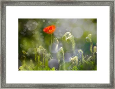 First Burst Framed Print by Richard Piper