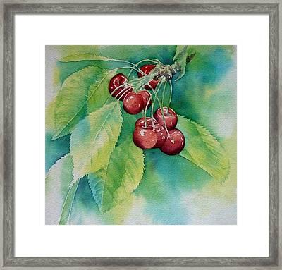 First Cherries Framed Print by Thomas Habermann