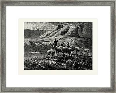 First Come, First Served Deer Framed Print by Cary, William De La Montagne (1840-1922), American