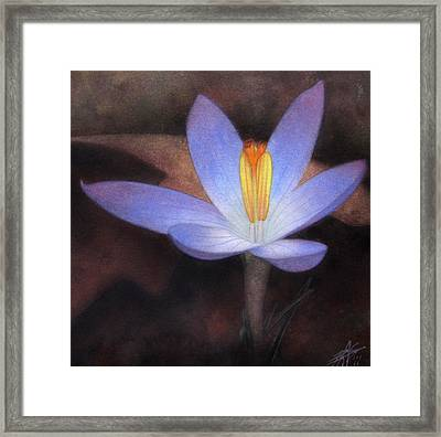 First Crocus Framed Print