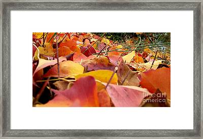 Framed Print featuring the photograph First Day Of Fall by Andrea Anderegg