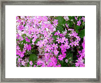 First Day Of Spring Framed Print by Andrea Anderegg