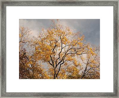 First Day Of Winter 3 Framed Print