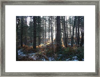 Framed Print featuring the photograph First Fall Of Snow On Cannock Chase by Jean Walker