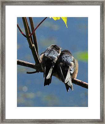 Framed Print featuring the photograph First Flight by I'ina Van Lawick
