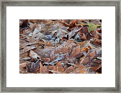 First Frost Framed Print by Jeri lyn Chevalier