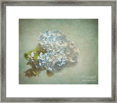 First Hydrangea - Texture Framed Print by Bob and Nancy Kendrick