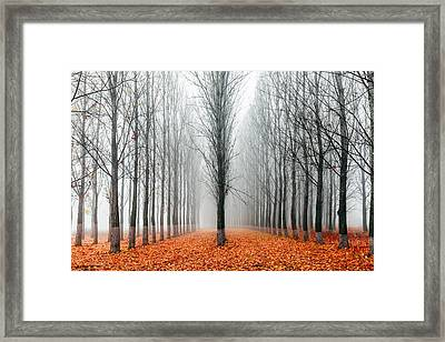 First In The Line Framed Print by Evgeni Dinev