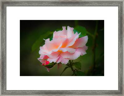 First Kiss Framed Print by Patricia Babbitt