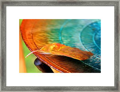 First Leaf Framed Print by Greg Simmons