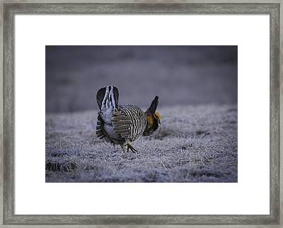 First Light 3 Framed Print