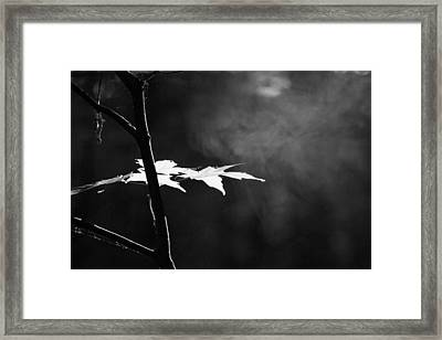 First Light In The Forest Framed Print by Dan Sproul
