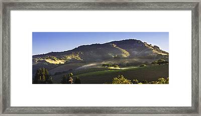 First Light On The Vineyard Framed Print by Karen Stephenson
