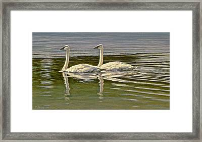 First Open Water - Trumpeters Framed Print by Paul Krapf