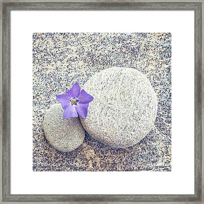 First Periwinkle  Framed Print by Delphimages Photo Creations