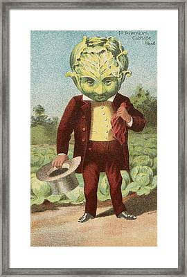 First Premium Cabbage Head Framed Print by Aged Pixel