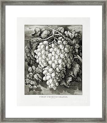 First Premium Grapes - A Royal Cluster - 1865 Framed Print by Pablo Romero