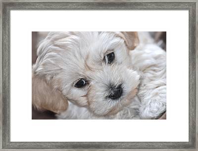 First Puppy Portrait Framed Print
