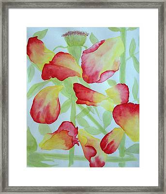 First Rose Framed Print