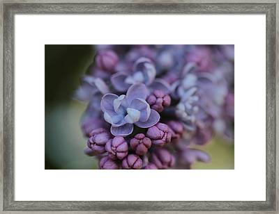 First Scent Of Love Framed Print