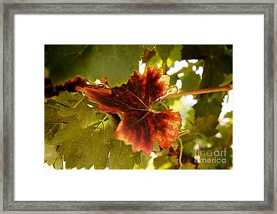 First Signs Of Autumn Framed Print by Dry Leaf
