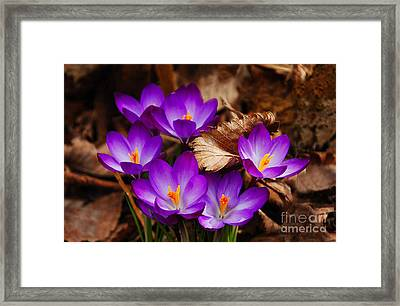 First Signs Of Spring Framed Print by Elaine Manley