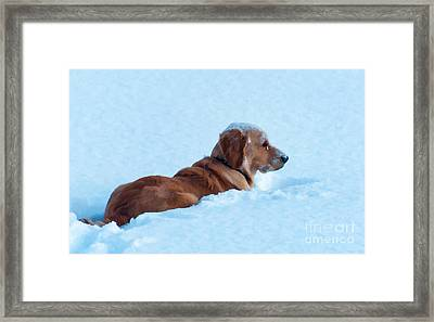 First Snow Bliss Framed Print by Bianca Nadeau