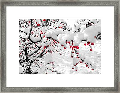 First Snow Framed Print by Michelle and John Ressler
