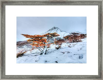 First Snow Framed Print by Roman St