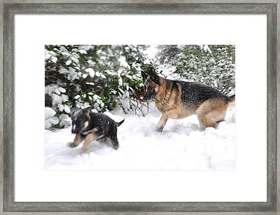 Framed Print featuring the photograph First Snow by Tanya  Searcy