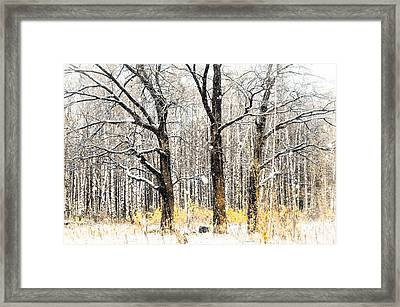 First Snow. Tree Brothers Framed Print by Jenny Rainbow