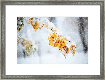 First Snow With Autumn Leaves Framed Print by Jenny Rainbow