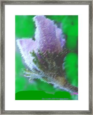 First Spring Flower Framed Print by Dr Loifer Vladimir