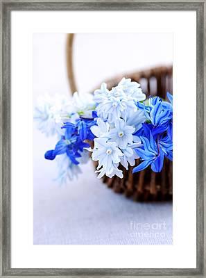 First Spring Flowers Framed Print