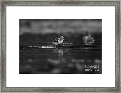 Framed Print featuring the photograph   First Steps by John F Tsumas