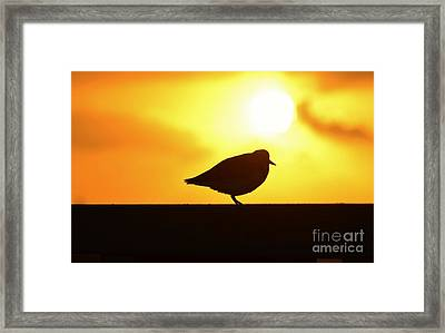 First Sunrise Silhouette Framed Print