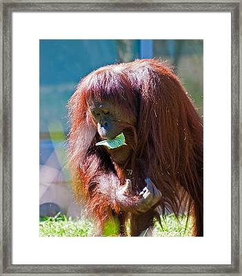 First Things First Framed Print by Donna Proctor