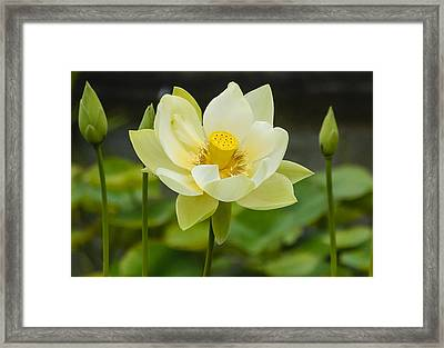 First To Bloom Framed Print