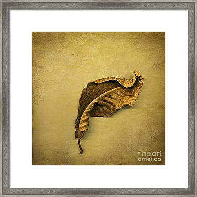 First To Fall Framed Print by Jan Bickerton