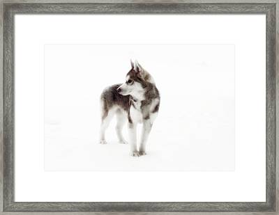 First Winter Framed Print by Iconic Images Art Gallery David Pucciarelli