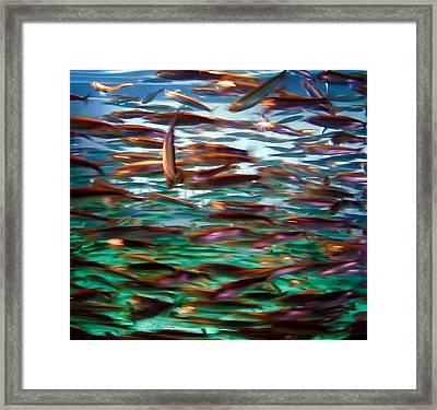 Fish 1 Framed Print by Dawn Eshelman