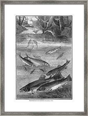Fish, 1880 Framed Print