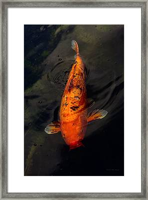 Fish - Big Fish Little Pond  Framed Print by Mike Savad