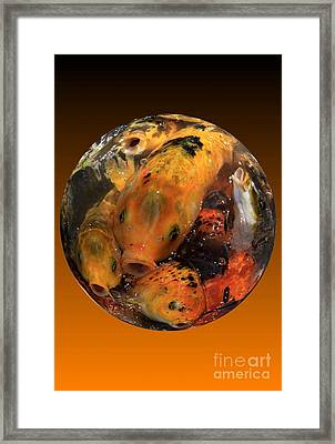 Fish Bowl Framed Print