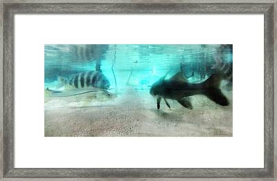 Fish By Sharon Cummings Framed Print by William Patrick