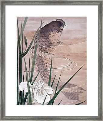 Fish Framed Print by C. F. Kell