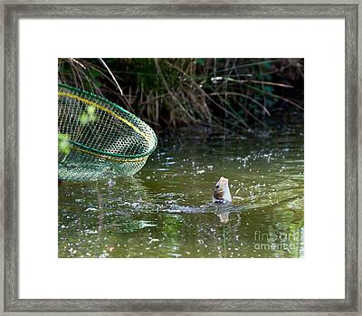 Fish Caught On A Line In Water Framed Print
